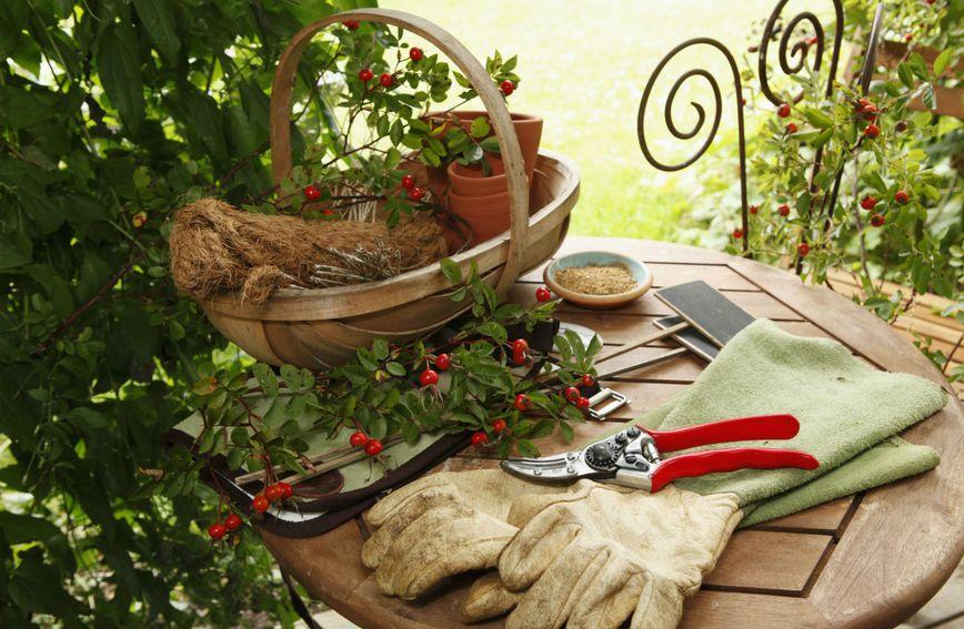 Vrtlari imaju manju razinu hormona stresa, bolje spavaju i dobrog su mentalnog zdravlja