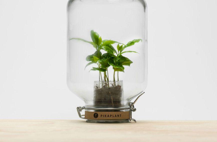 Pikaplant Jar je biljka koju nije potrebno zalijevati zahvaljujući imitaciji prirodnog procesa unutar same staklenke. (Foto: Zadovoljna.hr)