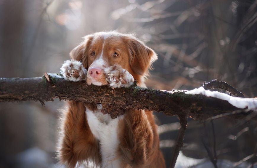 Nemaju svi psi dovoljno dugačku dlaku koja ih može štititi od hladnoće i ledenog vjetra.