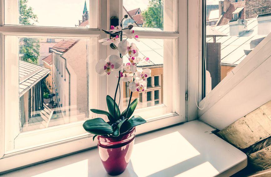 Orhideje je poželjno dohranjivati otprilike dva puta mjesečno