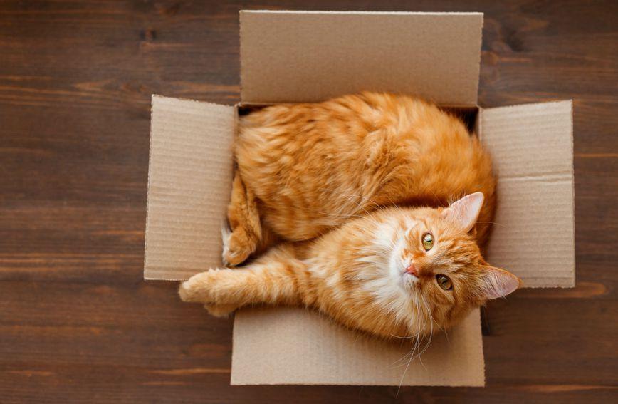 Ležanje u kutiji vrlo je uobičajeno ponašanje za mačke