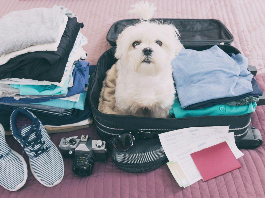 Pas i putovanje