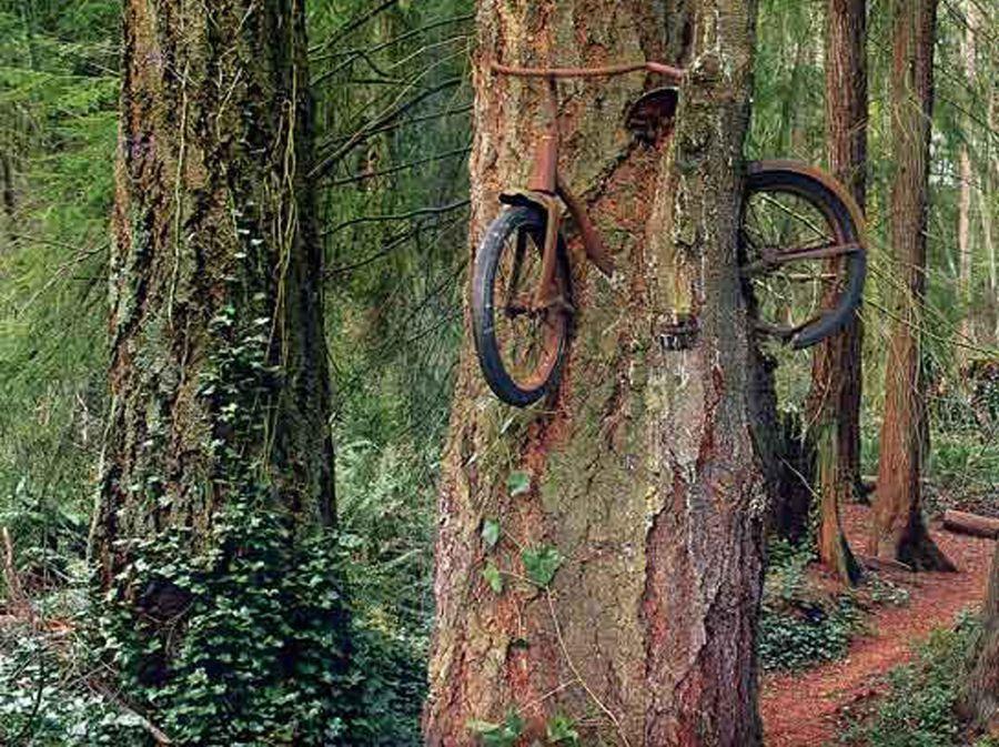 Gladno drveće - 5