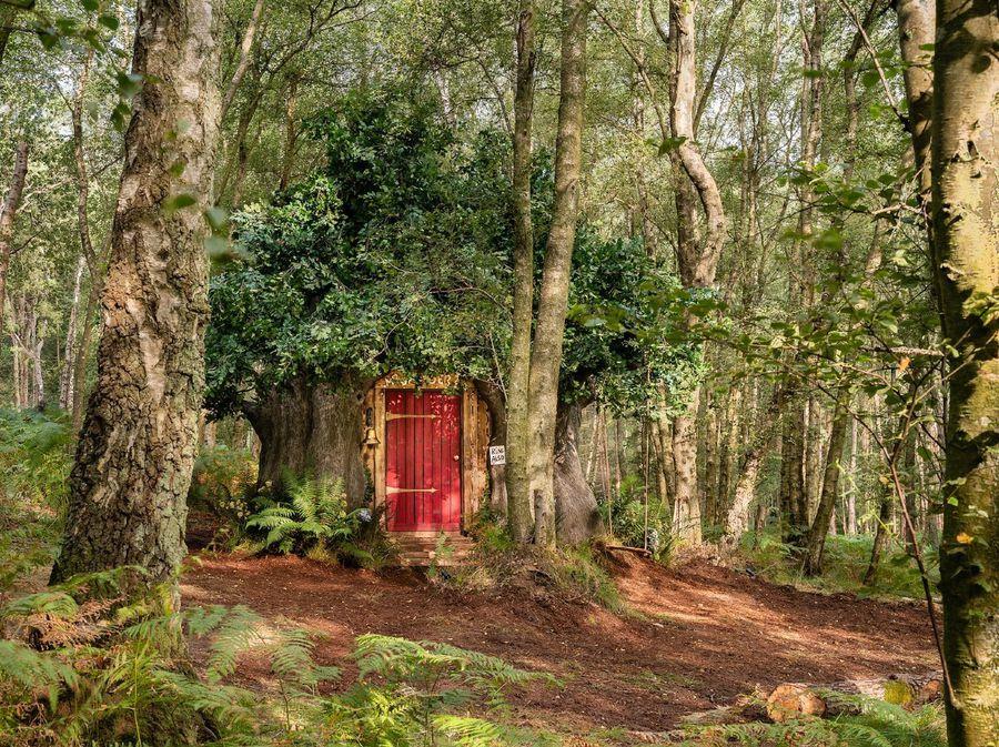 Bearbnb, Winnie Pooh kućica, Engleska - 2