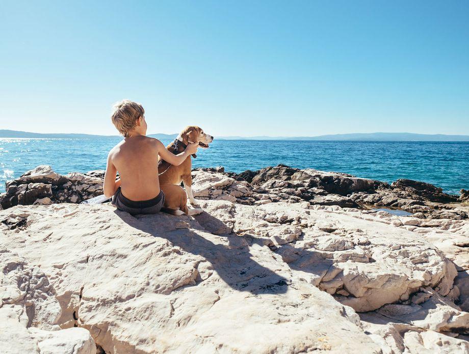 Psi na plaži - 1