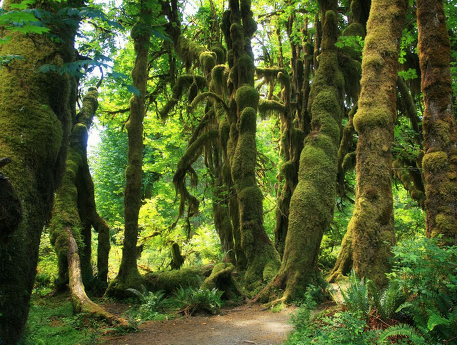 Olympic National Forest, SAD - 2
