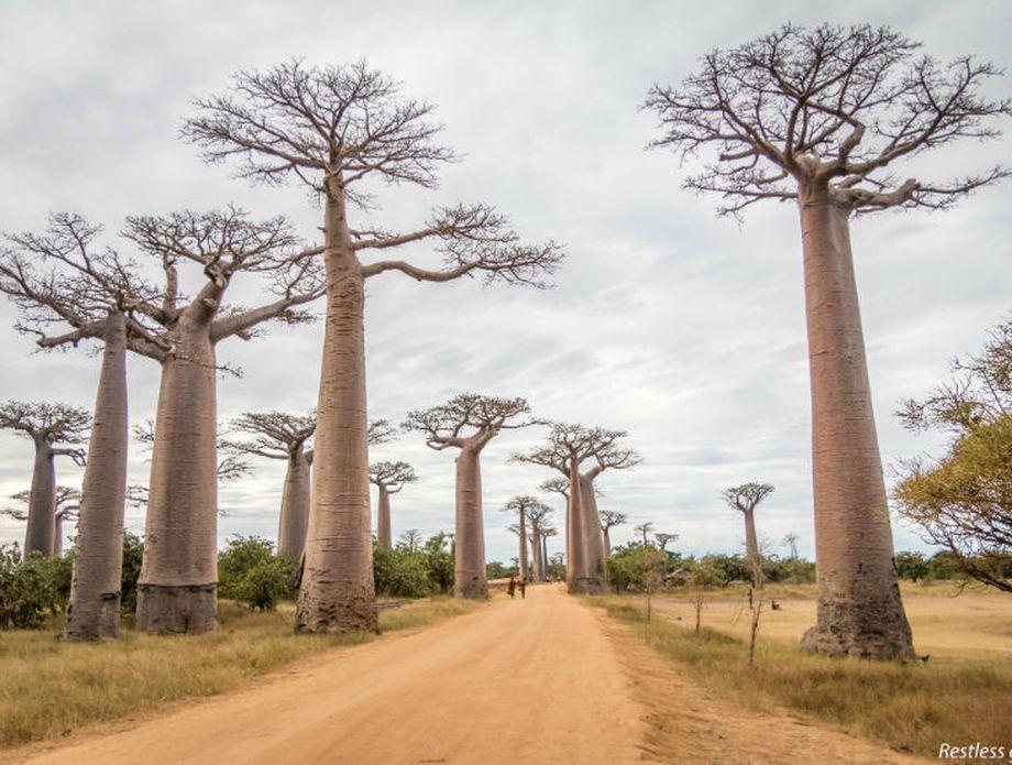 Madagaskar - 5