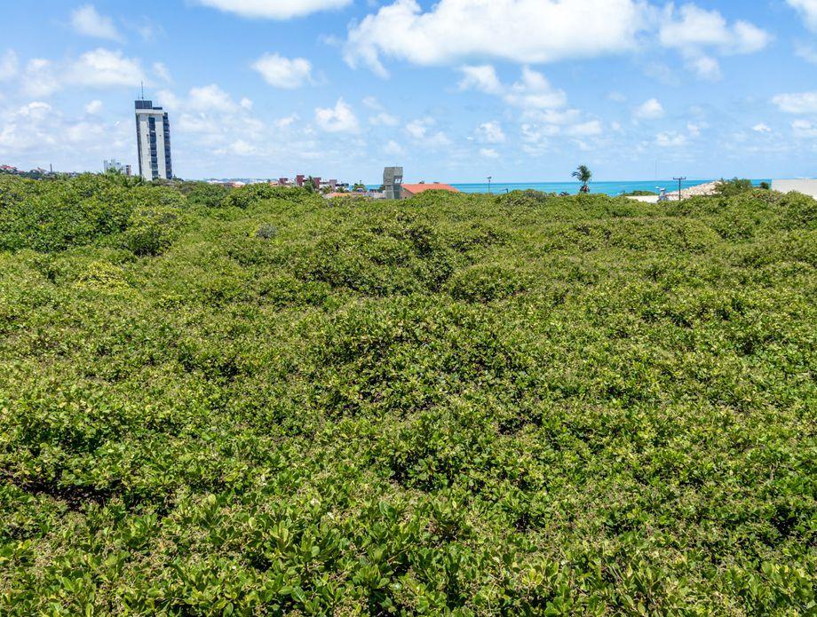 Najveće stablo indijskih oraščića na svijetu, Natal, Brazil - 4