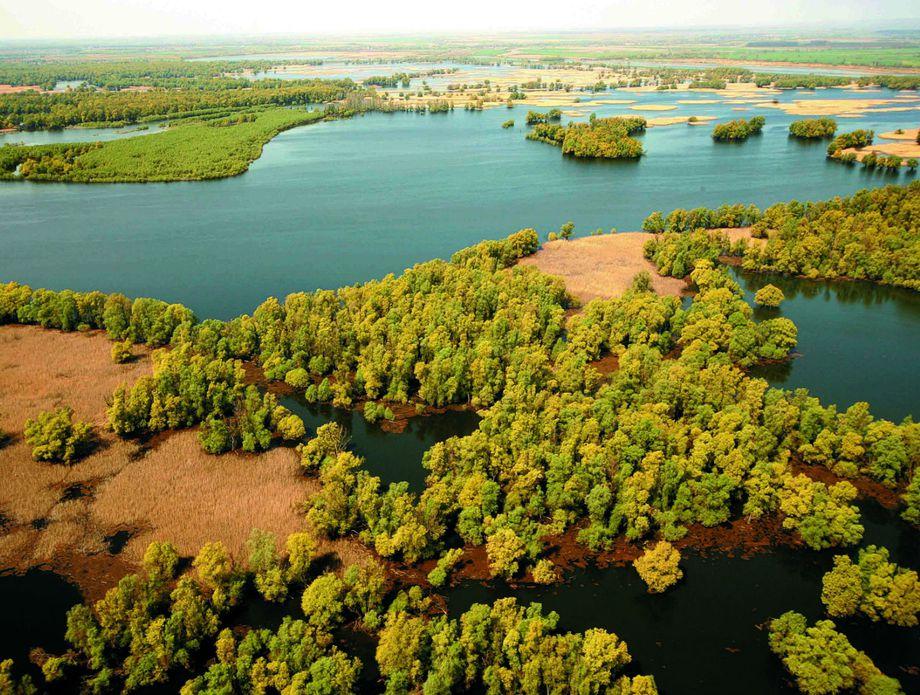 Europska Amazona