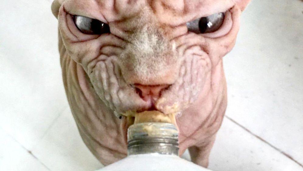 Mačak bez dlaka postala internetska senzacija (Foto: Profimedia)