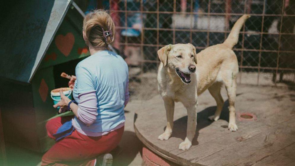 Udruga Pobjede iz Osijeka svake godine organizira proslavu Praznika rada u azilu za pse