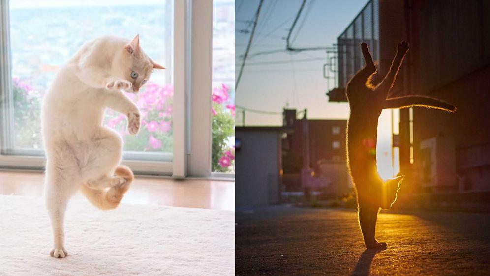 Rasplesane mačke (Foto: boredpanda.com)