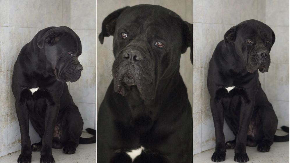 Pas Otto (Foto: Sklonište za životinje Grada Zagreba)