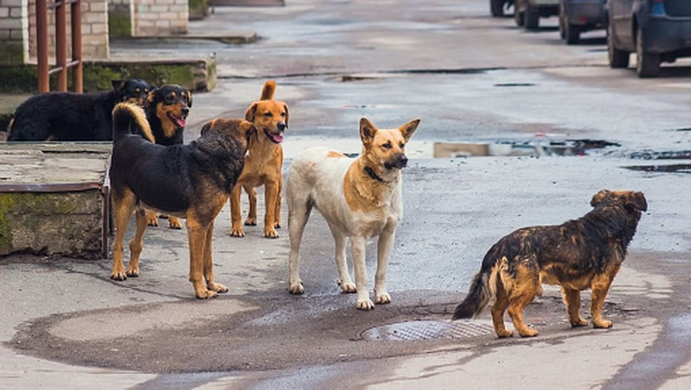 Napušteni psi, ilustracija (Foto: Getty Images) - 1