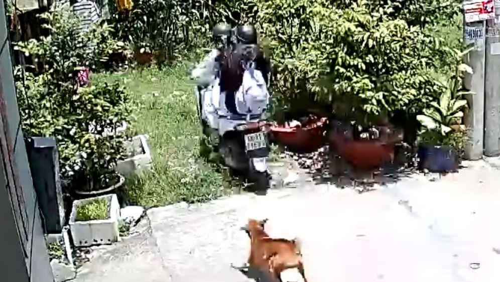 Pas i skuter (Foto: Screenshot/YouTube)