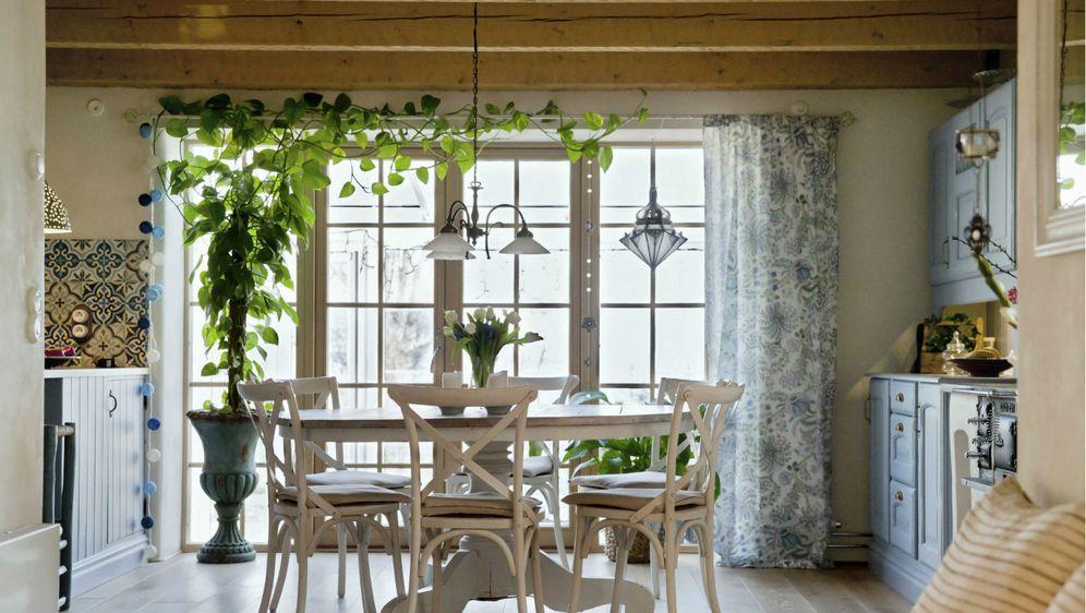 Ukrasno sobno bilje izgleda vrlo efektno i u kuhinji
