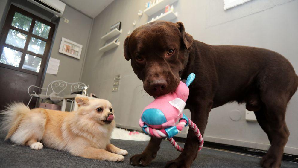 Na Zametu u Rijeci otvoren je vrtić za pse Dog Bar
