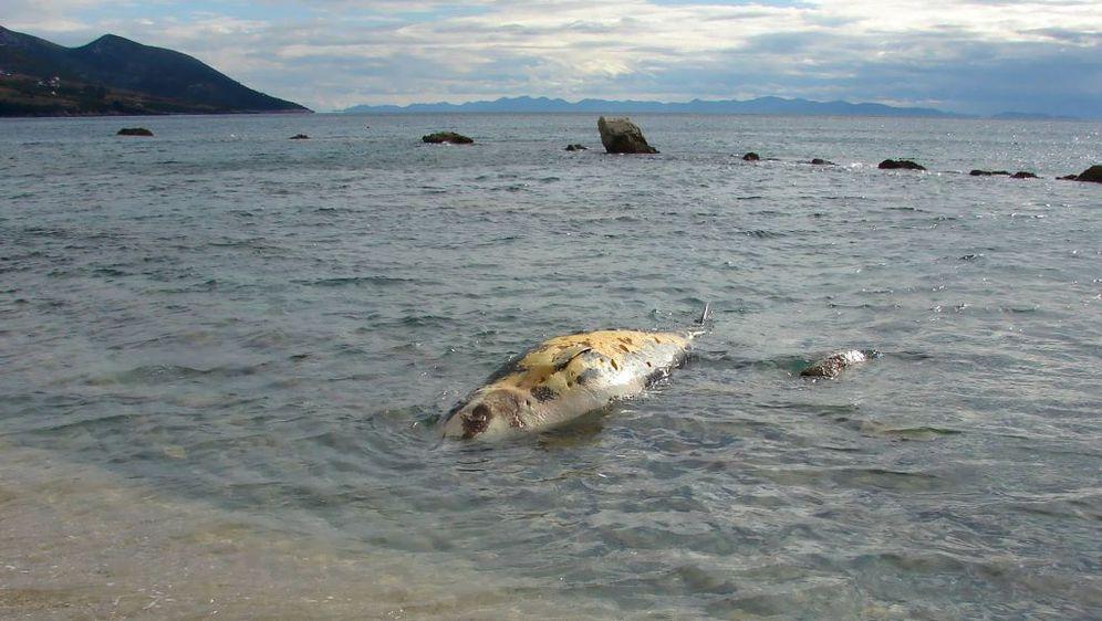 More na obalu nanijelo kita (Foto: Ivica Trojanović/Facebook)