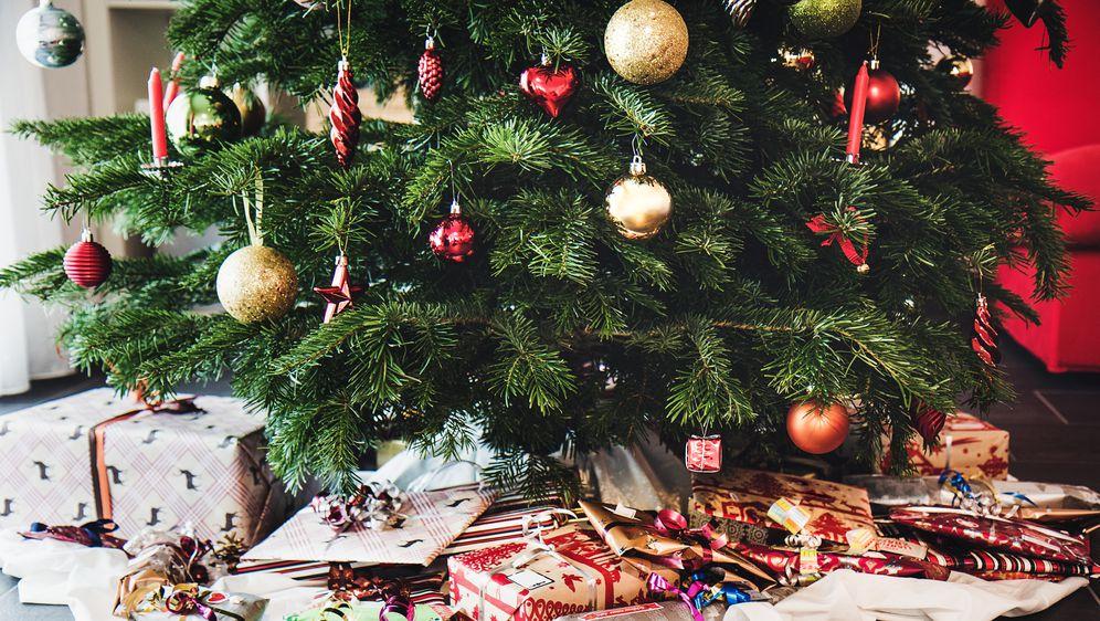 Kako odabrati božićno drvce koje će trajati