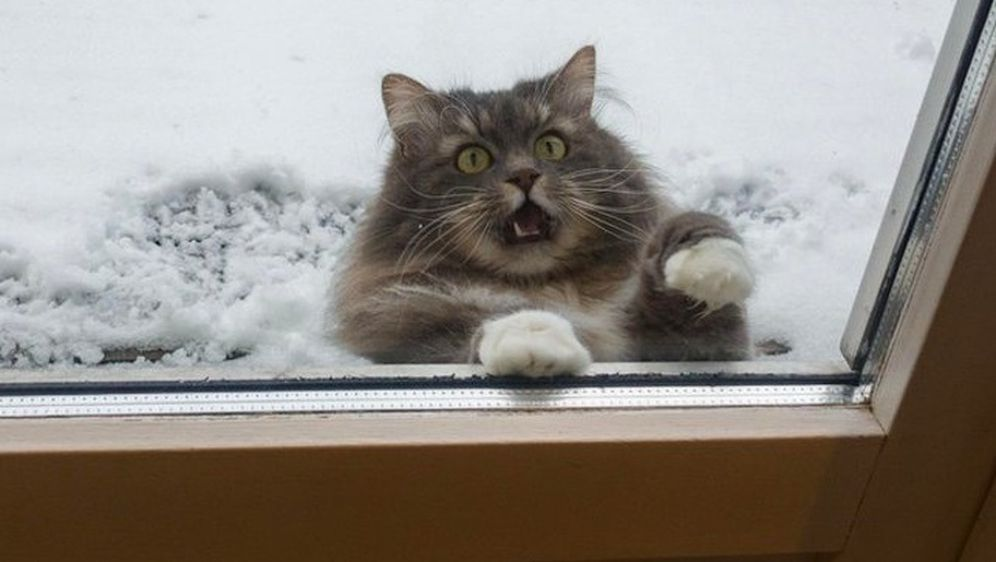 Mačke i snijeg (Foto: brightside.me) - 17