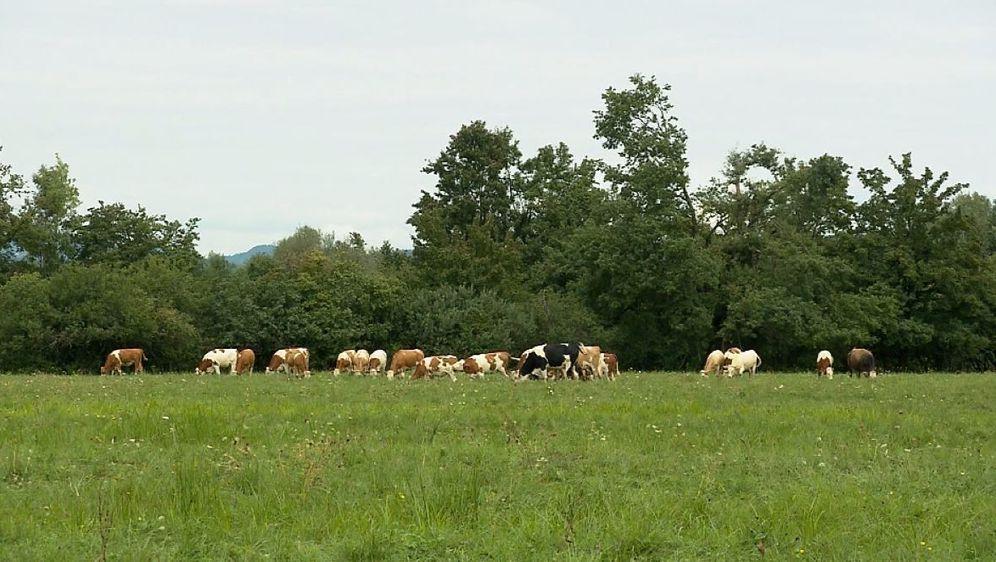 Neobrađena zemlja poljoprivrednicima (Foto: Dnevnik.hr) - 3