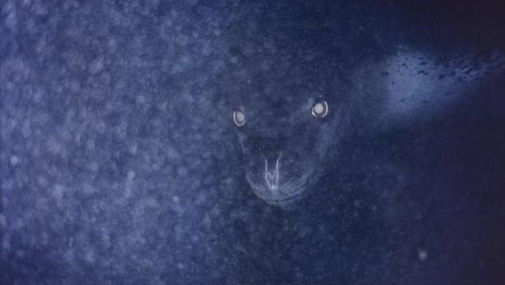 Strah od dubina (Foto: izismile.com) - 1