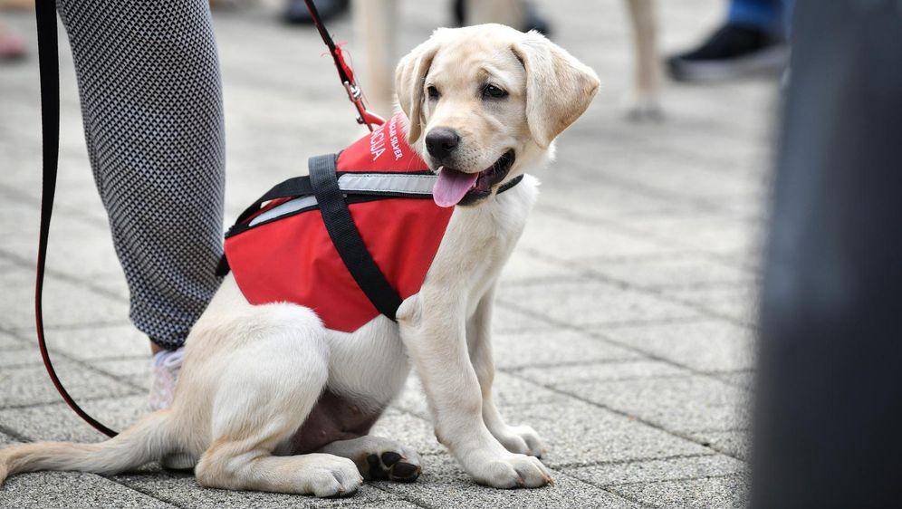 Terapijski pas, ilustracija (Foto: Sandra Simunovic/PIXSELL)