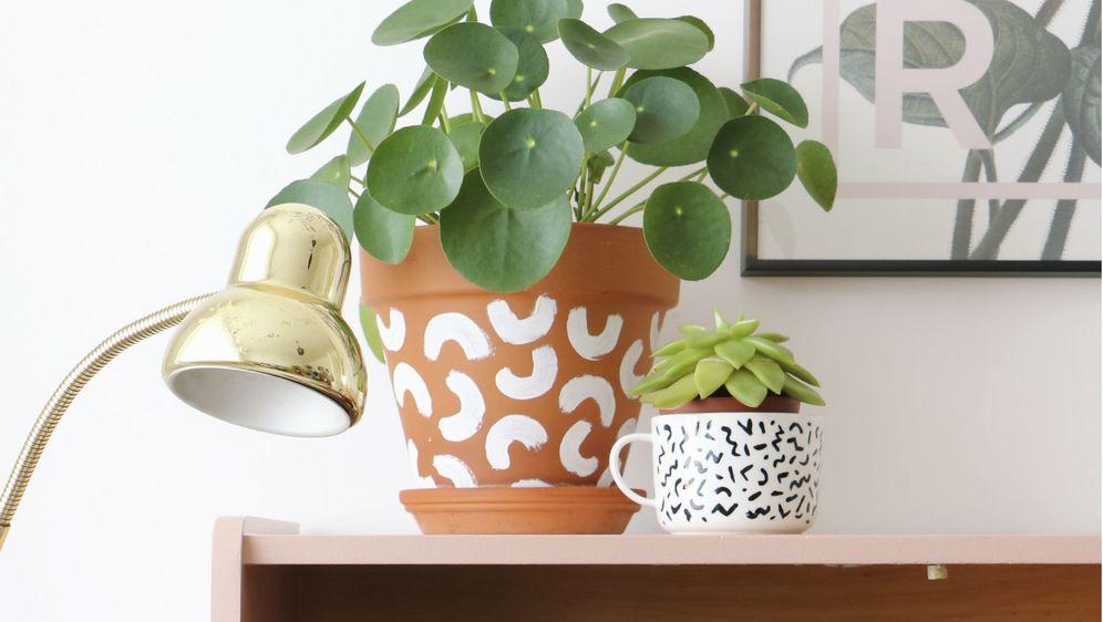 Pilea peperomioides (Kineski dolar) je biljka koja privlači energiju bogatstva i blagostanja