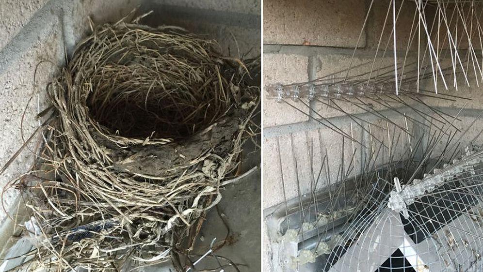 Obračun protiv ptica (Foto: Imgur)