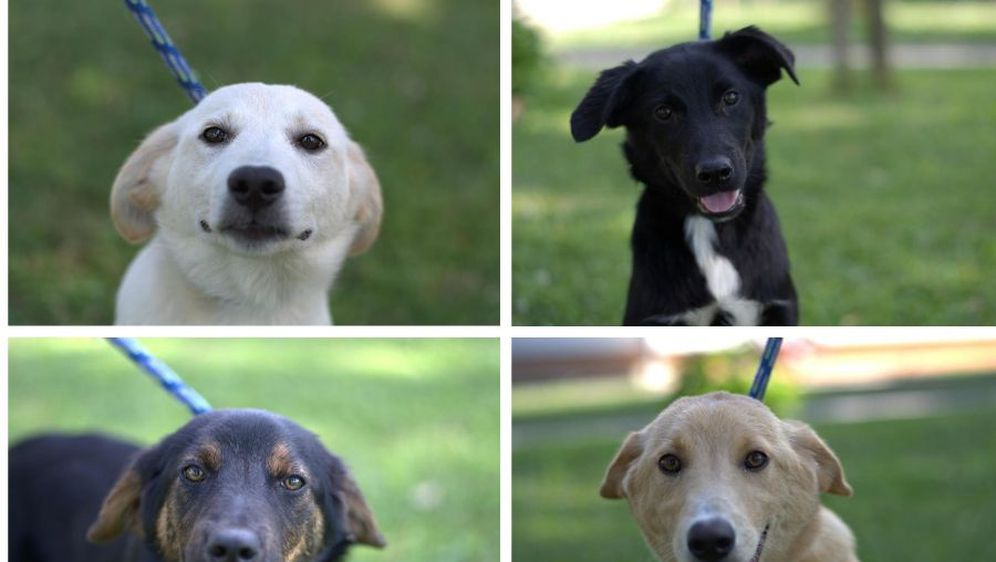 Psi iz Dumovca traže dom (Foto: Dumovec)
