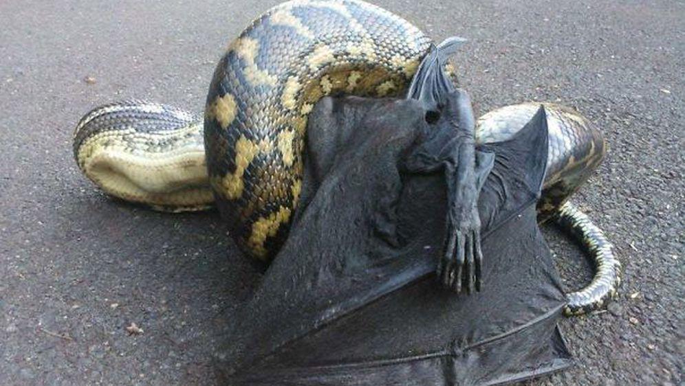 Australska čudovišta (Foto: boredpanda.com) - 34