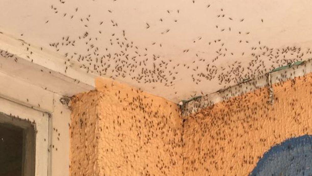 Komarci u Osijeku (Foto: Dnevnik.hr)