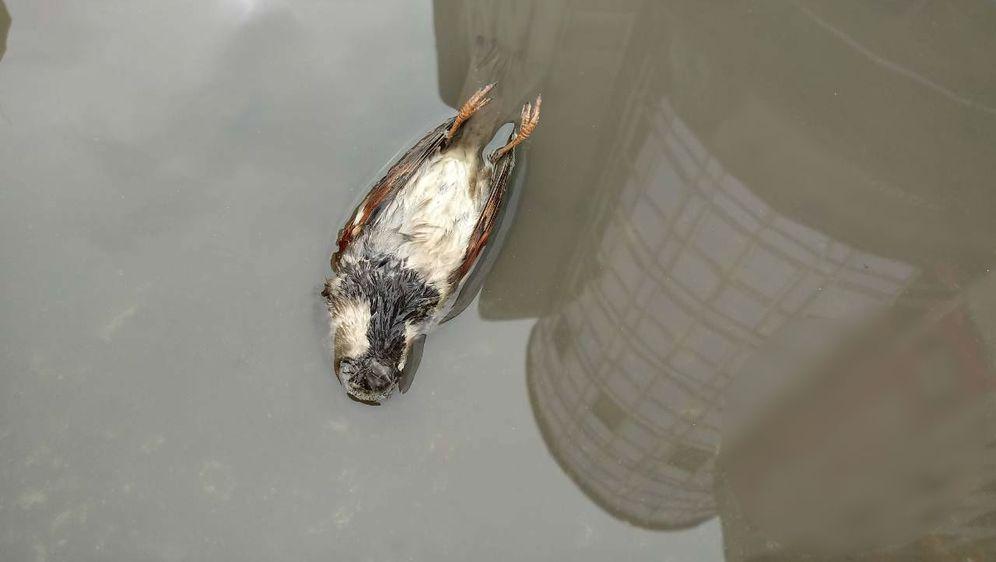 Uginula ptica u Osijeku (Foto: Goran Šantar)