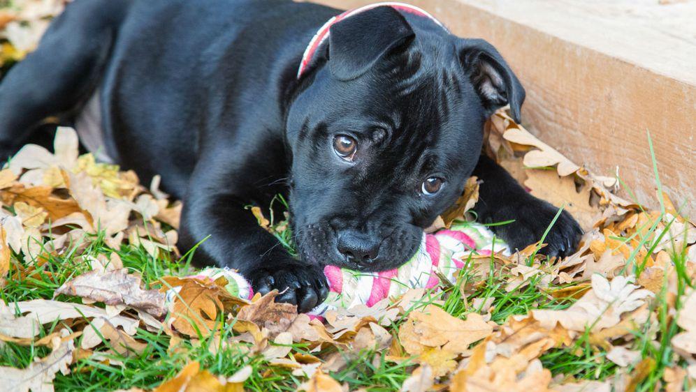 Kao i svi drugi psi, i crni psi puni su ljubavi