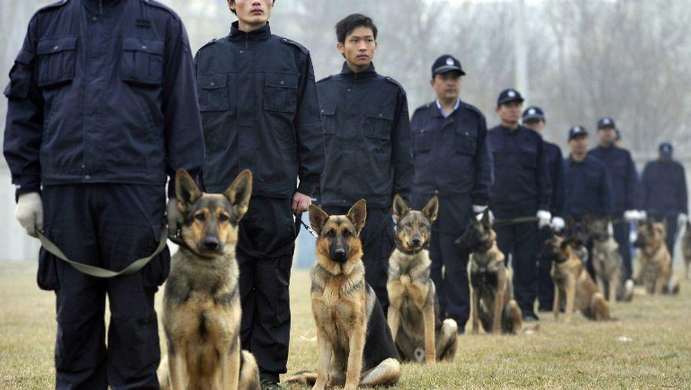 Policijski psi u Kini, ilustracija (Foto: AFP)