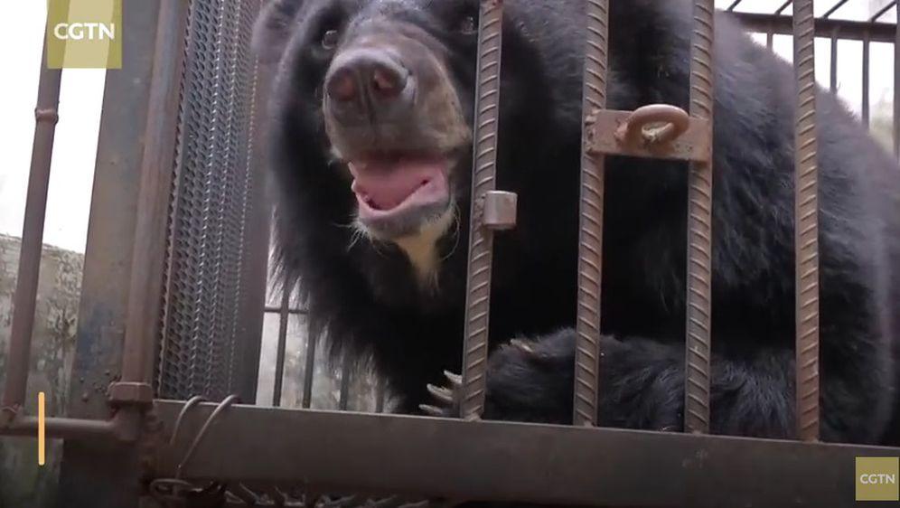 Žena mislila da je kupila štene tibetanskog mastifa, no ispostavilo se da je u pitanju – medvjed (Screenshot YouTube)
