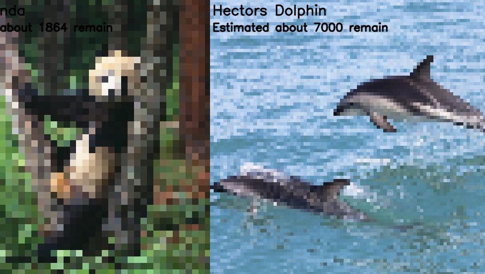 Pikseliziranje životinje (Foto: Imgur/JJSmooth44)