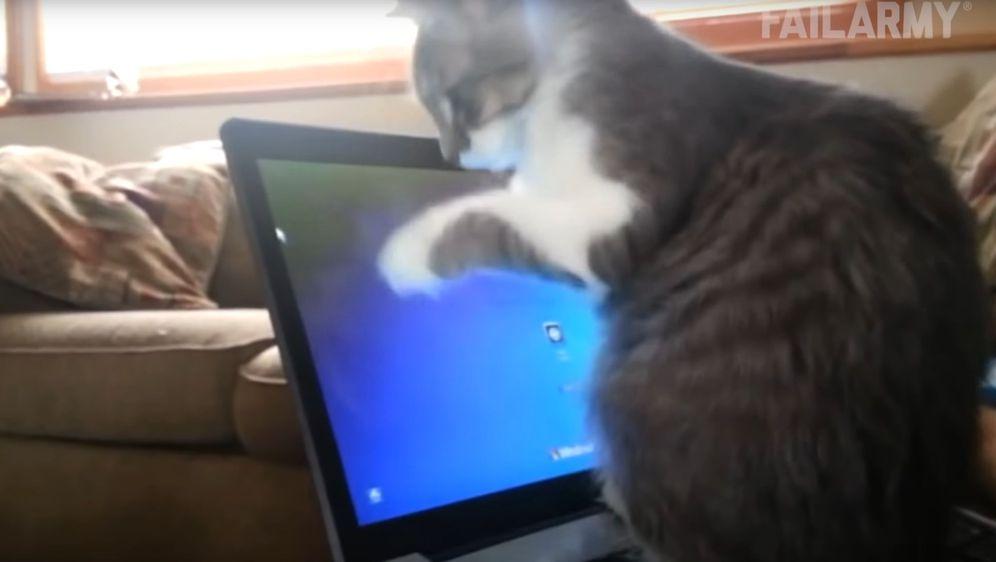 Maca (Foto: Screenshot/YouTube)