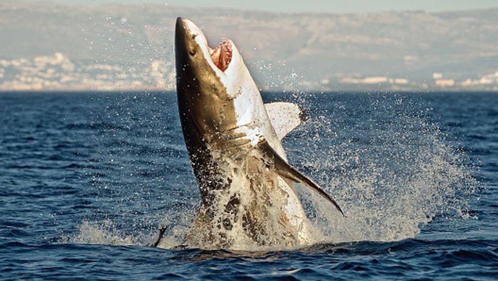 Morski pas, ilustracija (Foto: Getty Images)