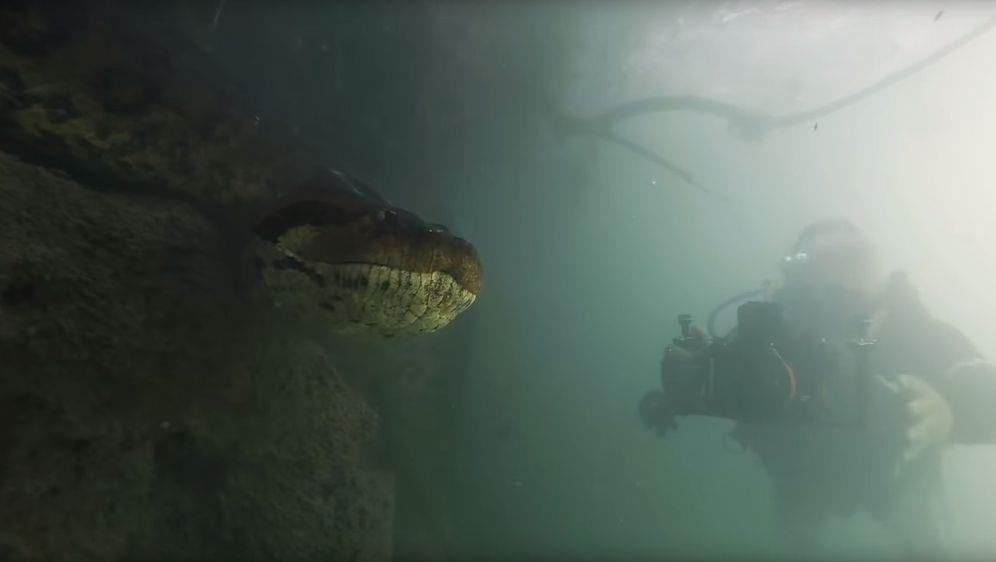 Anakonda (Foto: Screenshot)